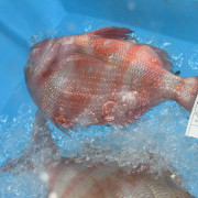 Fisch-Auktion